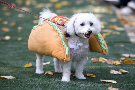 Poodle Taco