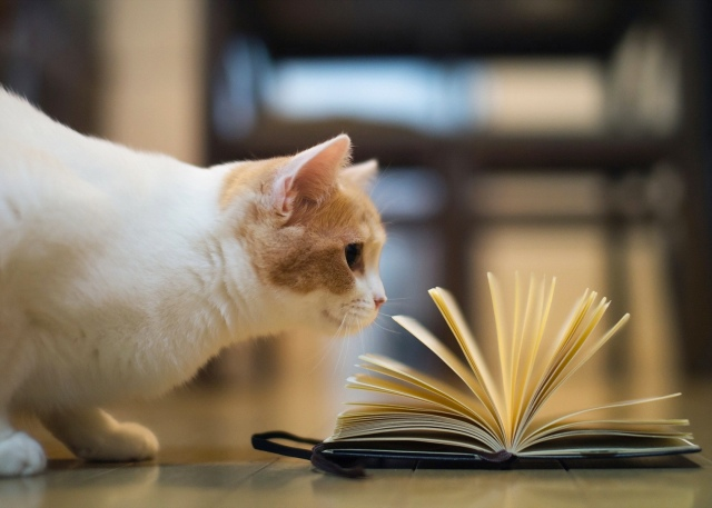 Cat reading book crop